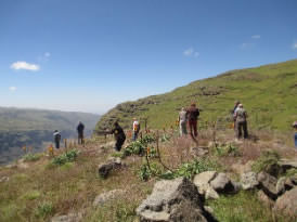Group trekking in the Simen Mountains
